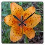 Manchado amarillo-naranja del lirio