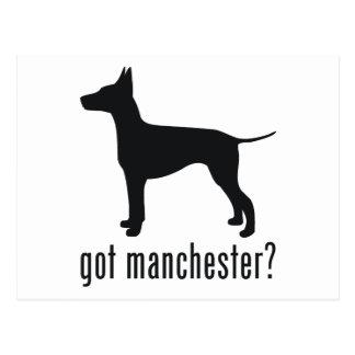 Manchester Terrier Postcard
