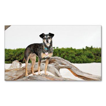 Beach Themed Manchester Terrier X - Jordan - Derr Business Card Magnet