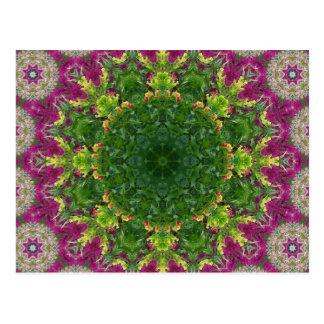 Mandala magenta de los círculos de las flores postal