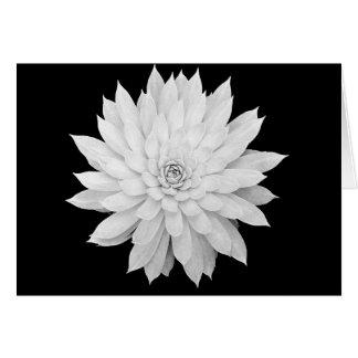 Mandala suculenta tarjeta de felicitación