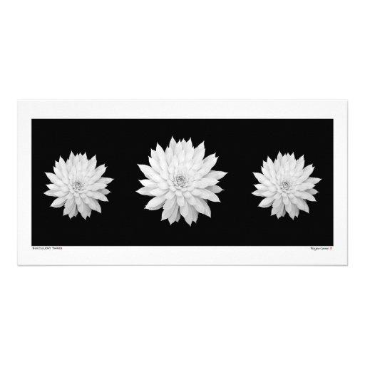 Mandalas suculentas tarjetas fotograficas personalizadas