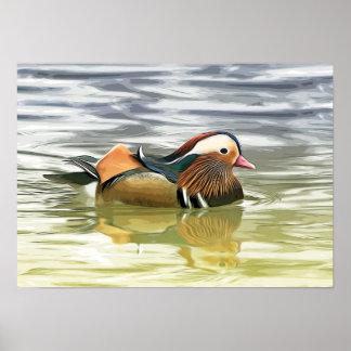 Mandarin duck / Aix galericulata Poster