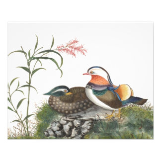 Mandarin Duck Chinese Painting Flyers