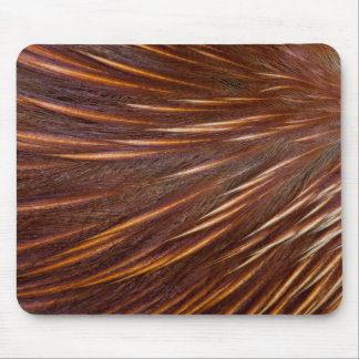 Mandarin Duck Feather Abstract Mouse Pad