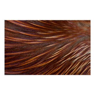 Mandarin Duck Feather Abstract Poster