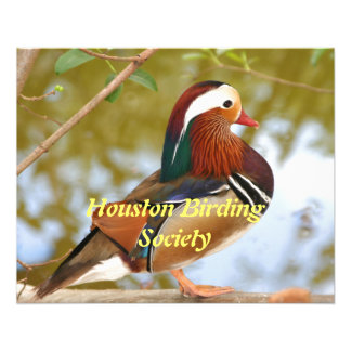Mandarin Duck Custom Flyer