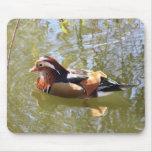 Mandarin Duck Mousepads