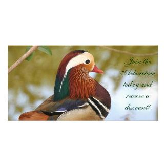 Mandarin Duck Photo Cards