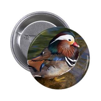 Mandarin Duck Pinback Button