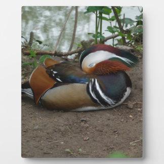 Mandarin Duck Photo Plaque