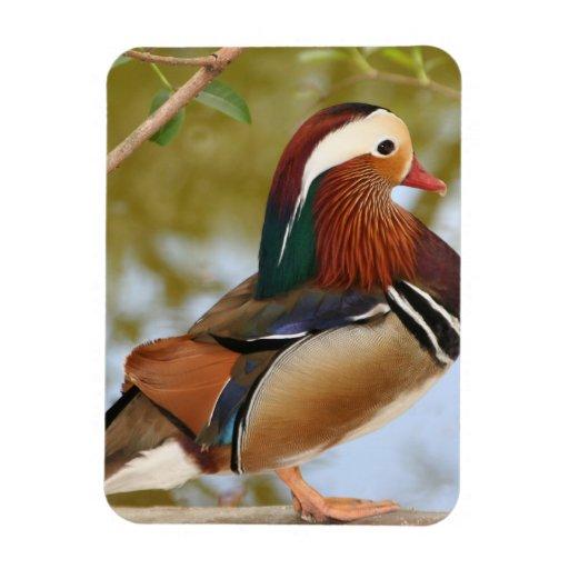 Mandarin Duck Rectangular Magnet