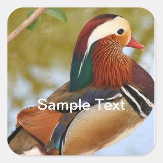 Mandarin Duck Square Sticker