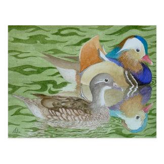 Mandarin Ducks on a lake Post Card