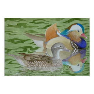 Mandarin Ducks on a lake Poster