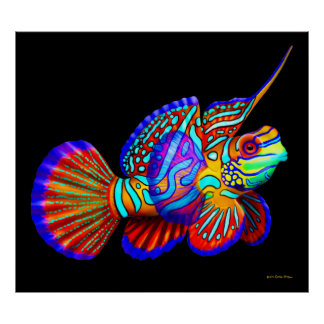 Mandarin Fish on Black Poster