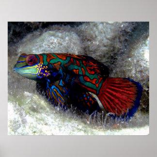 Mandarin Fish Print