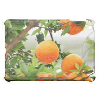 Mandarin fruit tree iPad mini covers