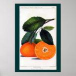 Mandarin Orange Poster