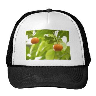 Mandarin Tree and Fruits Trucker Hat
