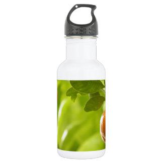 Mandarin Tree and Fruits 18oz Water Bottle