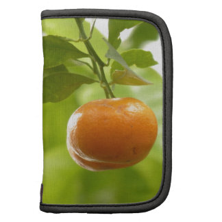 Mandarin Tree and Fruits Organizer