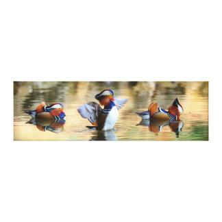 Mandarin Trio Canvas Prints