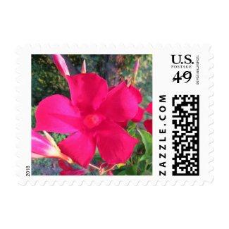 Mandavilla vine flowers postage stamp