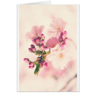 Mandelblüten Art Grußkarten