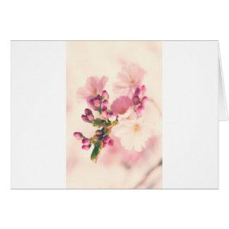 Mandelblüten Art Karten