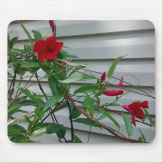 Mandevilla Against Side of House Mouse Pad