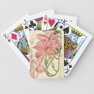 Mandevilla martiana bicycle playing cards