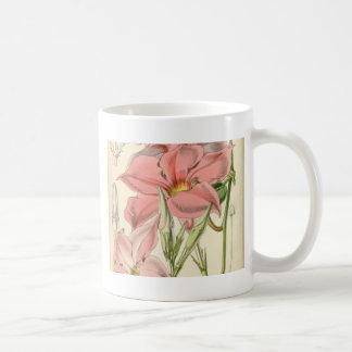 Mandevilla martiana coffee mug