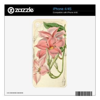 Mandevilla martiana iPhone 4S skins