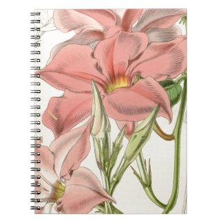 Mandevilla martiana spiral notebook