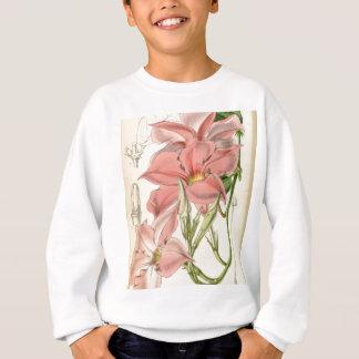 Mandevilla martiana sweatshirt