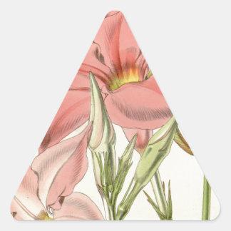 Mandevilla martiana triangle sticker