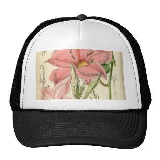 Mandevilla martiana trucker hat