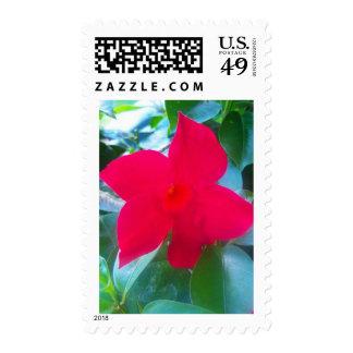 Mandevilla Red Riding Hood  flower Postage Stamps