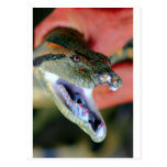 Mandíbulas del anaconda