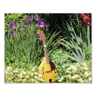 Mandolin And Iris Garden 10x8 Flower Print Photo