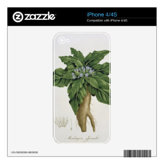 Mandragora Officinarum from 'Phytographie Medicale iPhone 4S Decal
