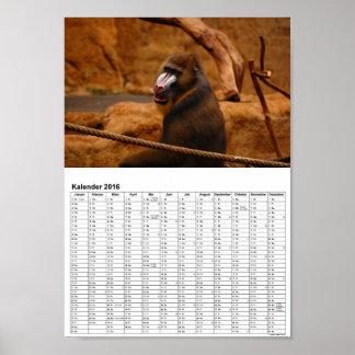 Mandril, Baboon/calendar 2016 DINA4 póster