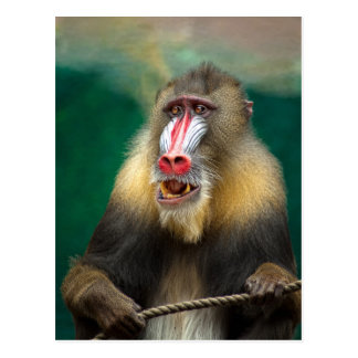Mandril Colors Postcard