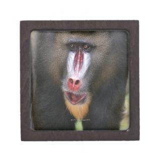Mandril (Mandrillus sphinx) close up Keepsake Box