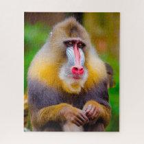 Mandrill Monkeys. Jigsaw Puzzle