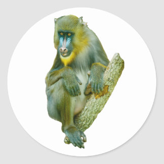 Mandrill Picture Gifts Classic Round Sticker