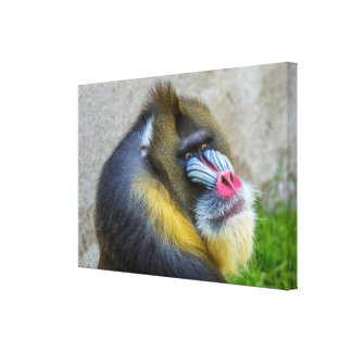 Mandrill Stretched Canvas Print