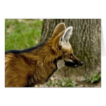 Maned Wolf  1529 Note Card