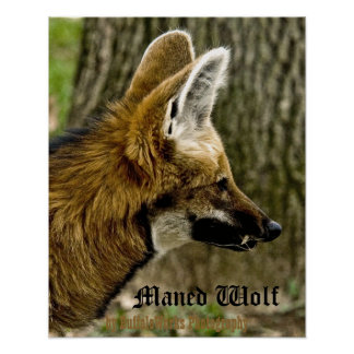 Maned Wolf  1529 Poster